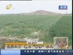 """临沂:大蒜之乡 遇上""""暗算""""小人"""