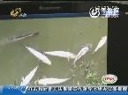 济宁:电闪雷鸣后 鱼大面积死亡