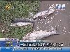 济南:一场大雨河坝变瀑布 村民出门捡鱼