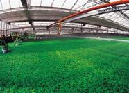 产业强市进程中的潍坊农业:再造现代农业发展新优势