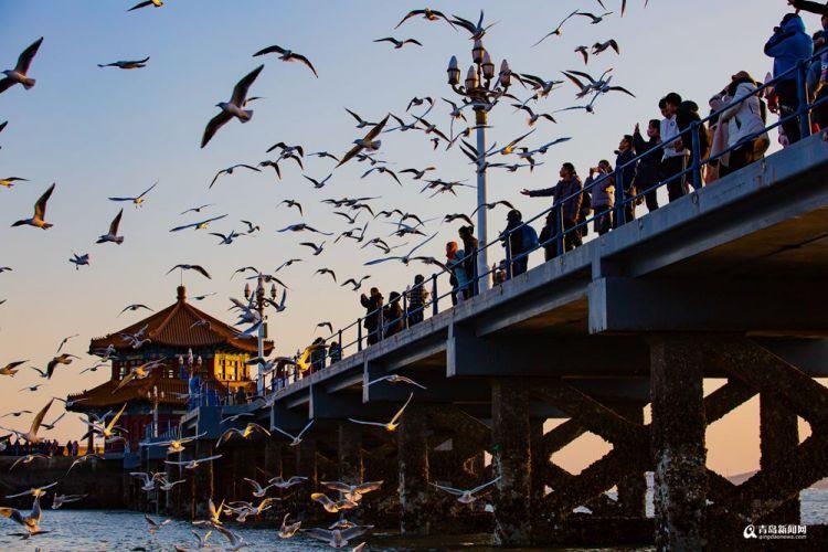 高清:冬天来青岛看海鸥 感受动物世界既视感
