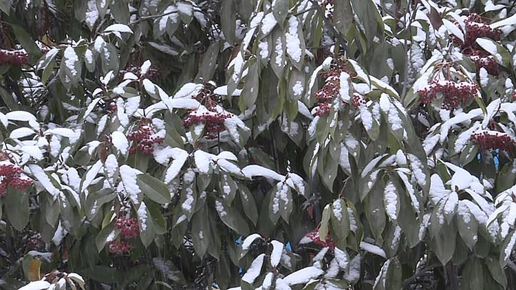 降雪3_副本.jpg