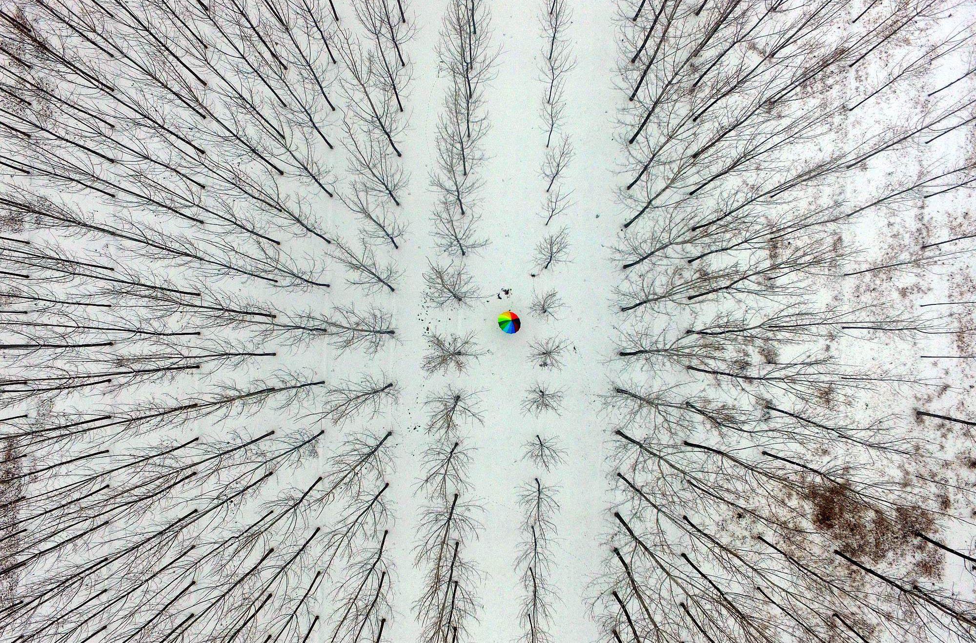 最美山东|航拍聊城迎新年降雪 菜农除雪忙