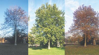 淄博一女子为公园一棵树一年拍了千张照