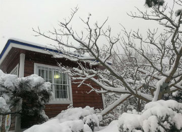 暴雪来了!威海迎来入冬以来最大降雪