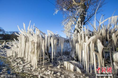 """(图六)资料图:受风暴""""埃莉诺""""影响,英国多地大雪降温,气温达到零下10℃。在苏格兰地区,甚至出现了冰冻植物的景观。 图片来源:视觉中国"""