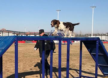 霸气警犬、神秘特种装备,警营开放日为德州110打Call