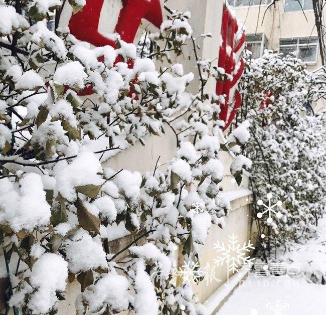 这就对了!三九天冰天雪地,青岛多地降温飘雪