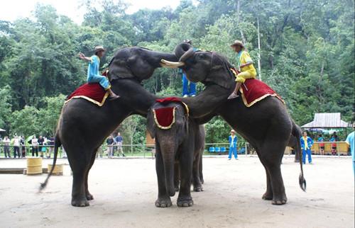 游客西双版纳被野象攻击致肋骨骨折 索赔近40万