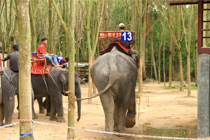 骑大象是泰国旅游传统项目
