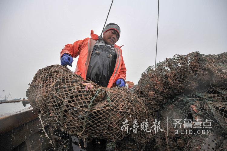 威海渔民雾中捕捞扇贝:赶在风浪前抢收