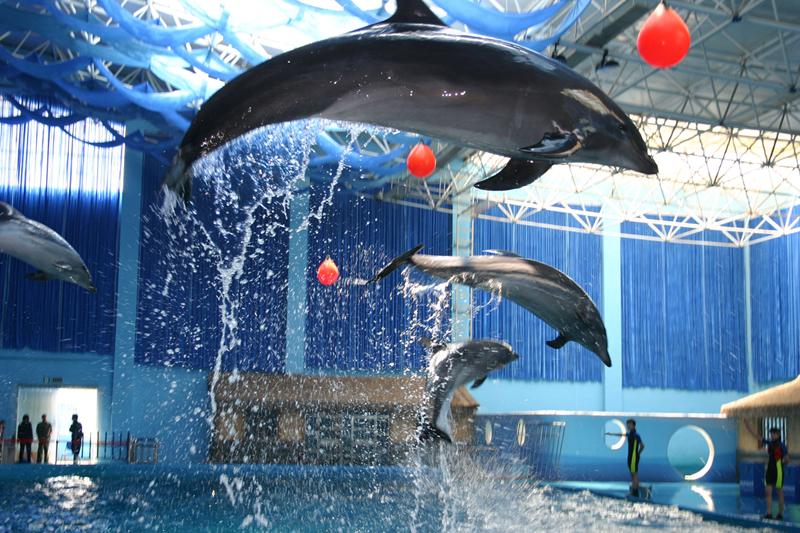 海豚表演高空击球_副本