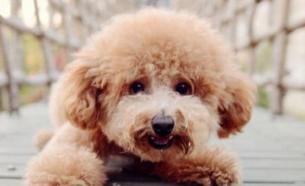 撞死泰迪犬赔偿5000元 保险公司定损500元