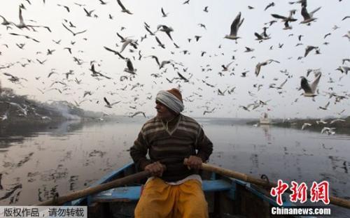 印度亚穆纳河一景:船夫摇橹河上 水鸟齐飞天际(图)