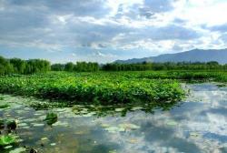 保护湿地资源 淄博已有7处省级以上湿地公园