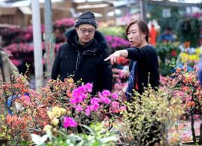 春节临近 济南花卉成热销产品