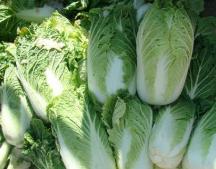上市量大需求低 淄博市场白菜价跌两成