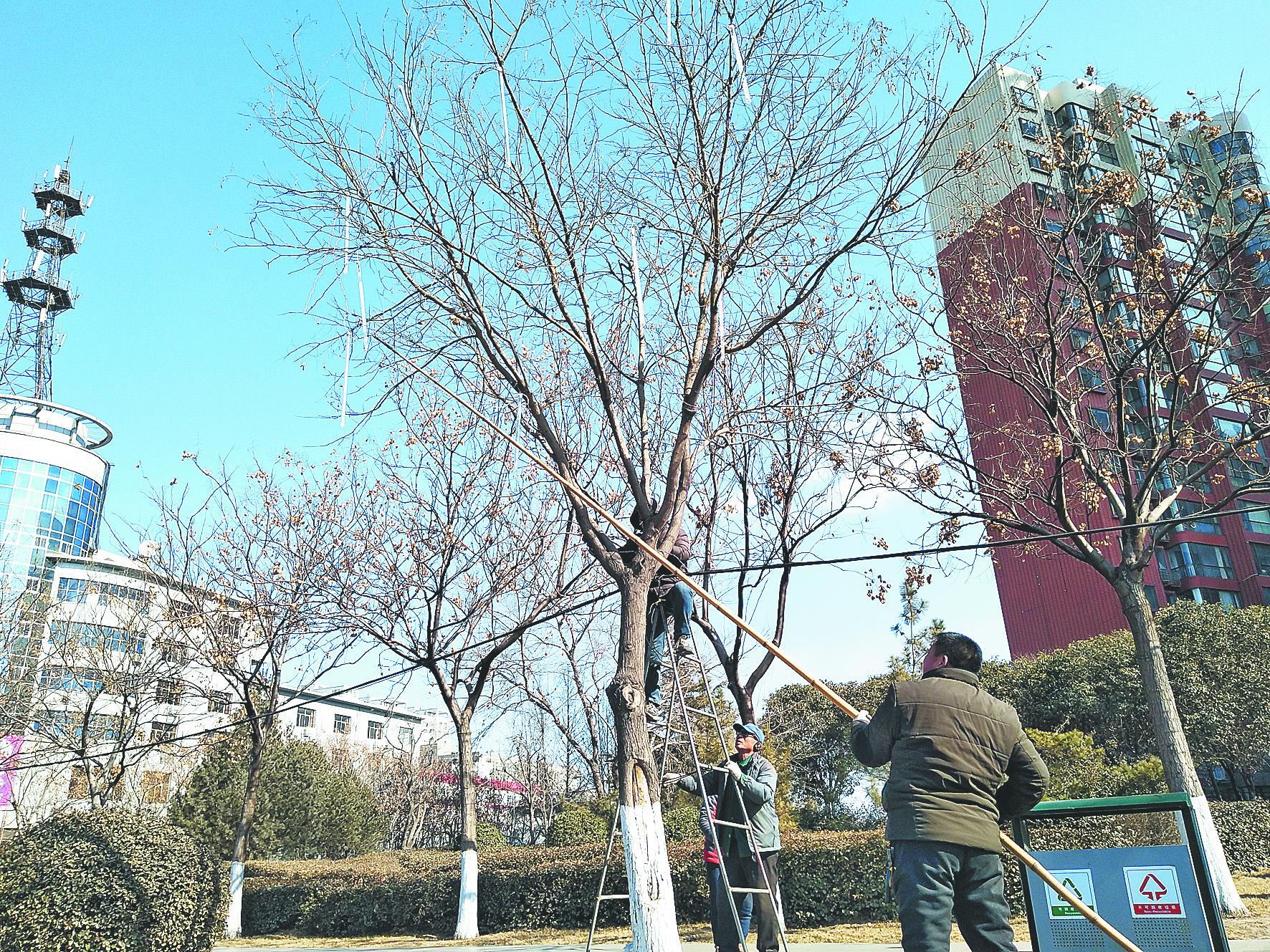 实施春节道路亮化工程 淄博高新区部分路段挂LED灯串