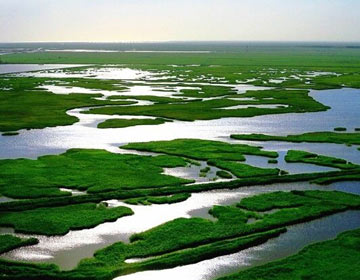 展示人与自然和谐美景!滨州市建起17处国家和省级湿地公园