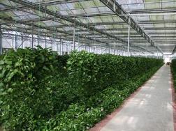 淄博将实施现代农业转型升级十大工程