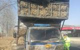 """聊城:农用车私自改型建成""""二层楼""""被交警当场查处"""