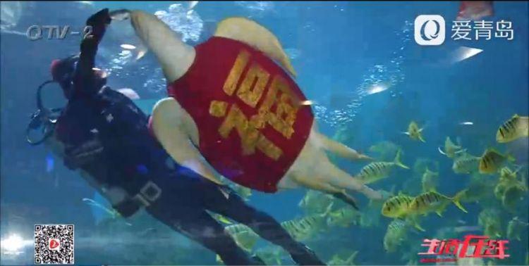 青岛海底世界海龟穿唐装 画面真是萌坏了(图)
