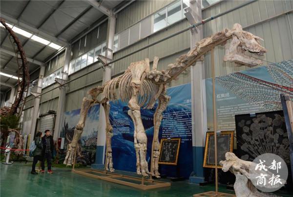 历时3年!大型巨犀化石修复成功 大年初八后可免费参观(组图)