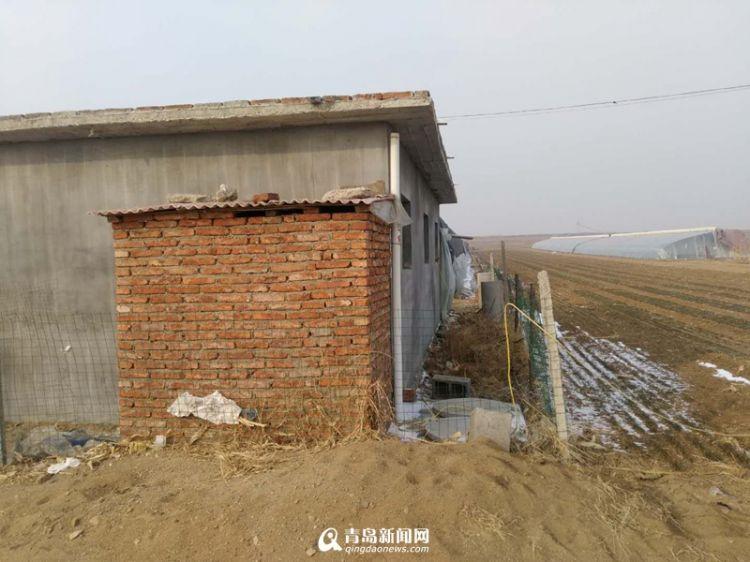 小厕所大民生 莱西两年完成14万座农厕改造