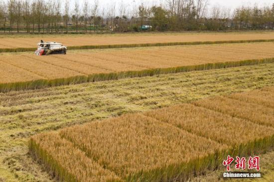 粮食局:加大监查 严禁不符安全标准粮食流入市场