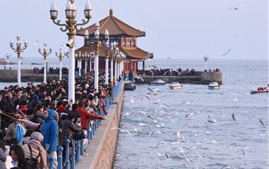 青岛栈桥游人如织 海鸥相伴过新年