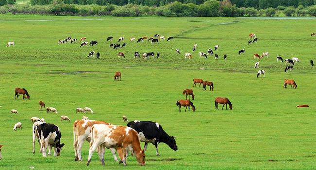 农业部提出打造畜牧业发展新模式