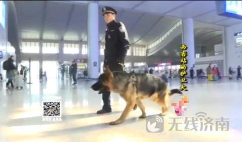 """西客站特殊小卫士:护卫犬""""六一"""""""