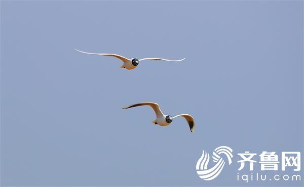 鸟 (1)_看图王
