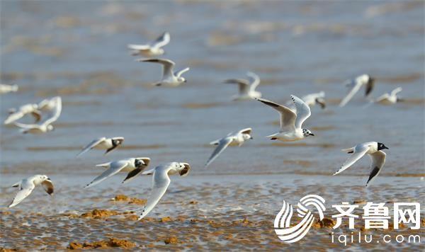 鸟 (2)_看图王