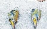 文昌湖省级旅游度假区:有人林中设网 多只小鸟遭殃