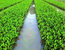淄川牛家人工湿地水质净化工程将开工 计划总投资4700万元