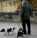 遛狗时被狗追赶 博山一老人头部摔伤