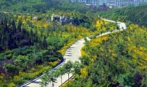 周连华现场调度路域绿化和生态修复工作