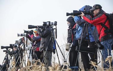 天气转暖 威海3000余只大天鹅即将迁徙