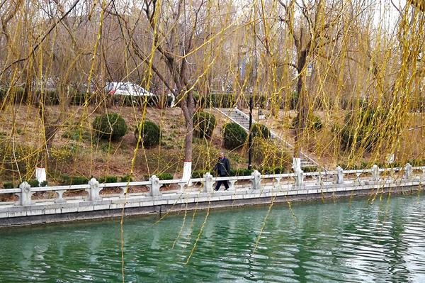 聊城:古运河畔春来早