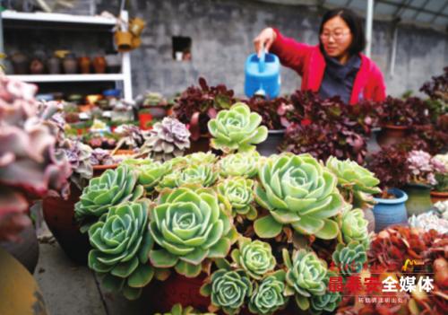 天气渐暖多肉植物走俏 泰安一商家一个月网售上千盆