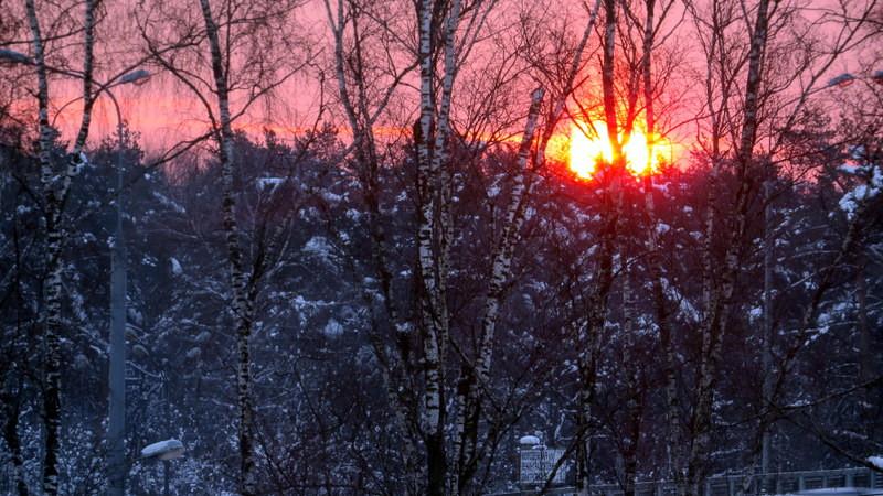白桦树与日出