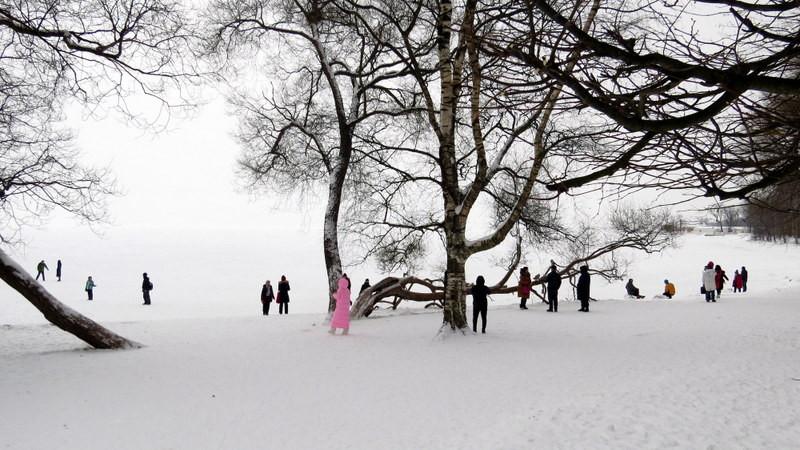 封冻的芬兰湾2
