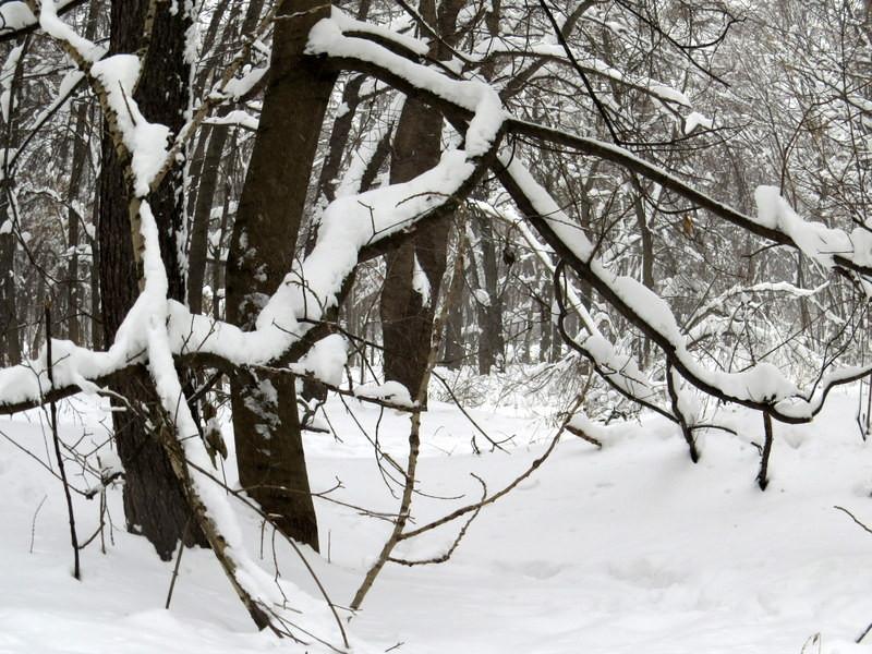 雪景(鱼眼效果)