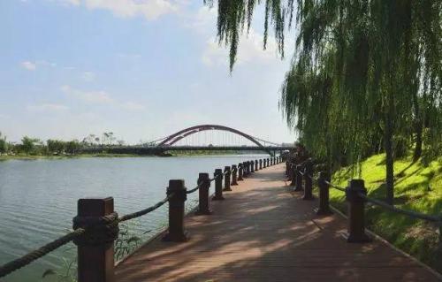 聊城将在徒骇河沿岸打造百公里花田彩堤骑行风光带