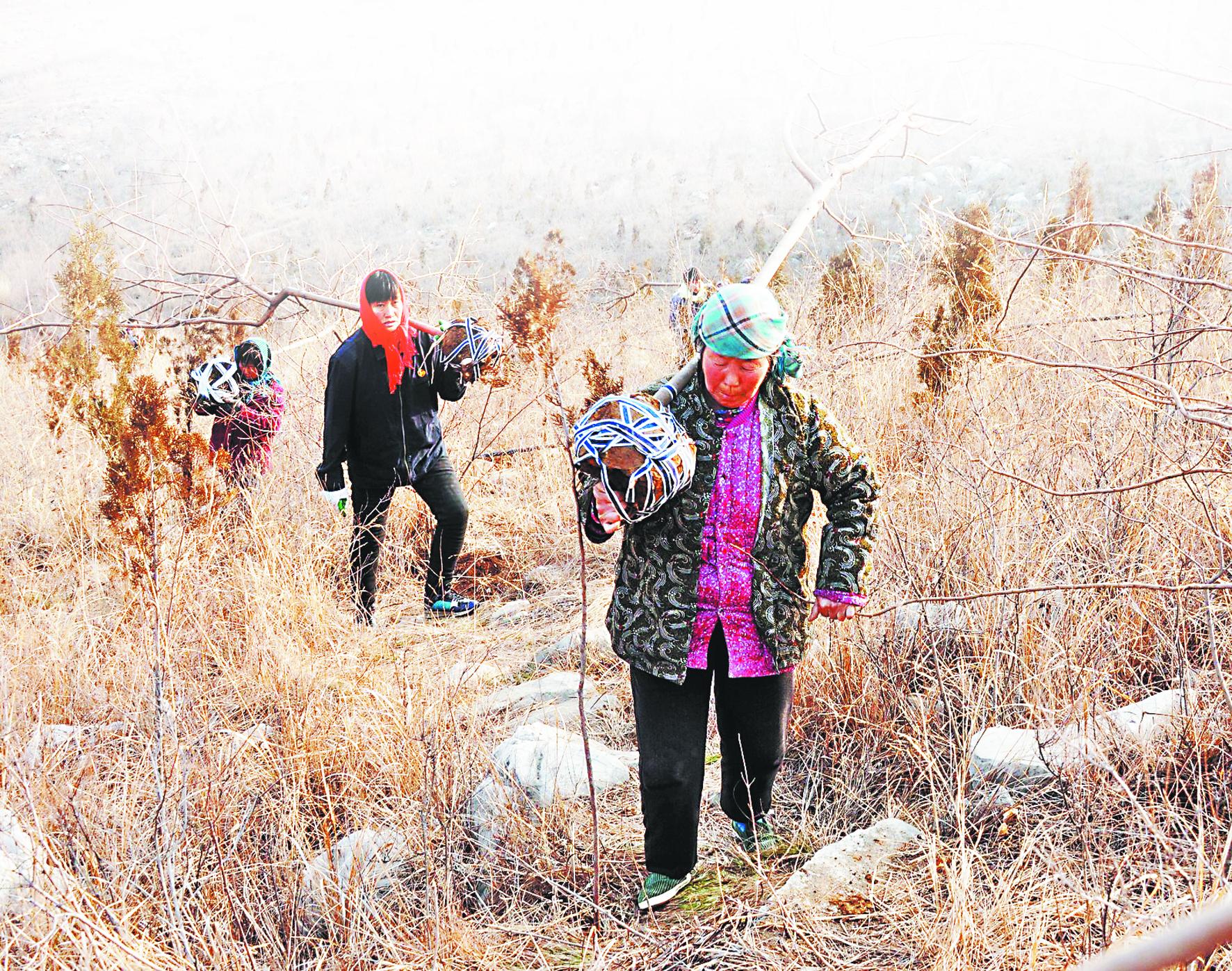 沂源县南鲁山镇掀起植树造林新高潮