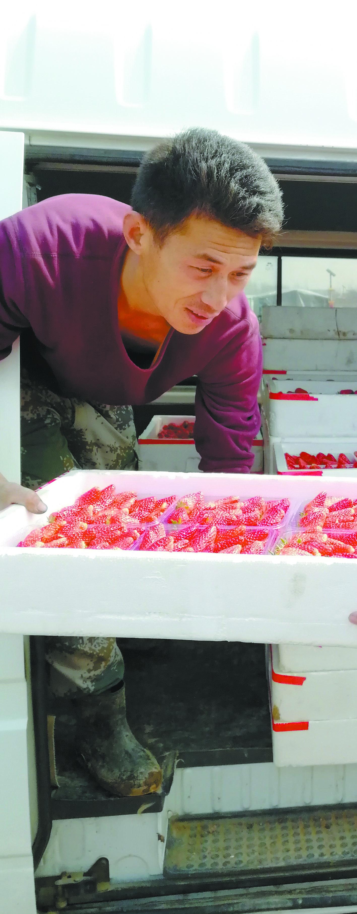 盖大棚建学院成立深加工公司 大流店村飘来阵阵草莓香