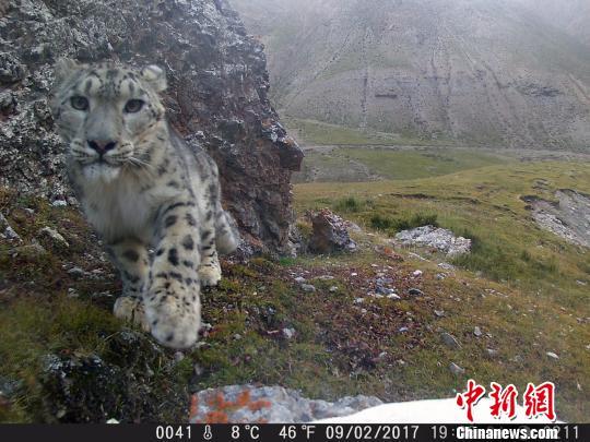 青海确定祁连山国家公园体制试点在内4项林业重点改革任务