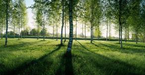 淄博今年将新增造林面积10万亩以上 3.3万人义务植树16.5万株