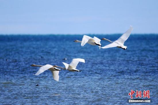 中国内陆最大咸水湖流域连续七年水质优良